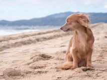 Cute dog looking at the ocean on the beach. On bright sand, family on vacation stock photos