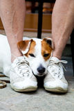 Cute dog looking for protection Stock Images