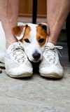 Cute dog looking for protection Royalty Free Stock Images