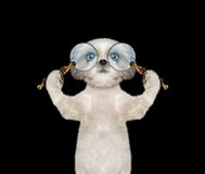 Cute dog looking through two magnifying glass magnifier Royalty Free Stock Photos