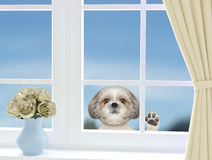 Cute dog looking through the window stock images