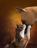 Cute Dog Love Cat Illustration Stock Photo