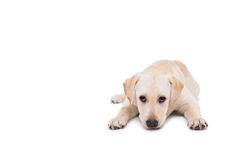 Cute dog lying down alone Royalty Free Stock Photos