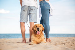 Cute dog lying near young couple on the beach. Closeup of cute dog lying near young couple on the beach Royalty Free Stock Photography