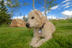 Cute dog in meadow Royalty Free Stock Photos