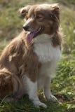 Cute dog Royalty Free Stock Photo