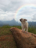 Cute dog at the mountain with rainbow Royalty Free Stock Images