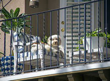 Cute dog outdoors on a balcony stock image