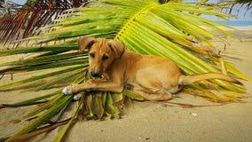 Cute Dog on a Palm leaf stock photo