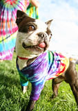 A cute dog at a park Stock Photo