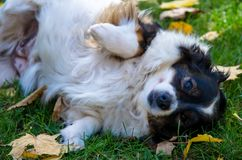 Cute dog in park royalty free stock photography