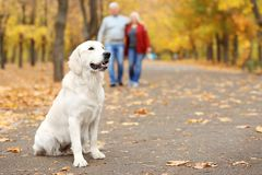 Cute dog on pathway in park with blurred couple. On background royalty free stock photos