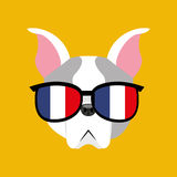 Cute dog pet with flag france glasses heart background Royalty Free Stock Photography
