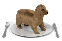 Cute dog on plate Royalty Free Stock Photography