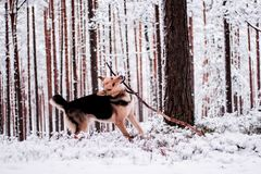 Cute dog playfully running and standing in the forest Royalty Free Stock Photos