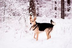 Cute dog playfully running and standing in the forest Royalty Free Stock Images