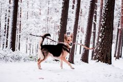 Cute dog playfully running and standing in the forest Royalty Free Stock Image
