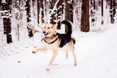 Cute dog playfully running and standing in the forest Royalty Free Stock Photo