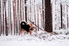 Cute dog playfully running and standing in the forest Stock Photos