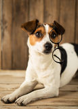 Cute dog playing with glasses Stock Photography