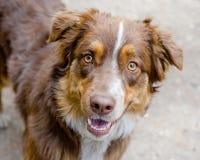 Cute dog portrait Stock Image