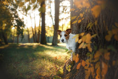Cute dog portrait in autumn outsude Royalty Free Stock Photos