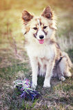 Cute dog. Portrait of cute mixed breed dog in nature Stock Image