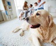 Cute dog royalty free stock photography