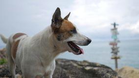Cute dog portrait with sea shore background. HD, Slowmotion. stock video