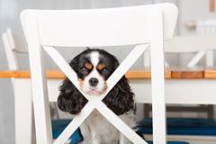Cute dog portrait Royalty Free Stock Images