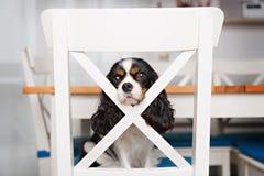 Cute dog portrait Stock Photos