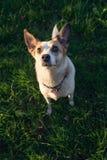 Cute dog portrait Royalty Free Stock Image