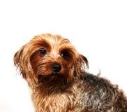 Cute dog portrait Royalty Free Stock Photo