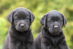 Cute dog puppies Stock Photos
