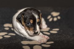 Cute dog puppy lookin to camera. Cute dog puppy sitting and loogin toward camera royalty free stock photography