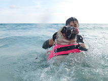 Cute dog puppy pug fear and afraid water swim on beach, Koh Kood , Thailand. (Kood Island, Trat province). Close-up face cute dog puppy pug fear and afraid water Stock Images
