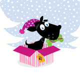 Cute dog puppy sitting in christmas present Royalty Free Stock Image