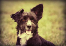 Cute dog puppy Royalty Free Stock Images