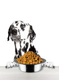 Cute dog refuse to eat from a bowl. Isolated on white background stock photos
