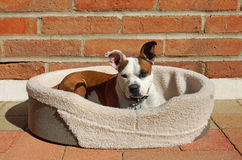 Cute dog relaxes in the sun Stock Images