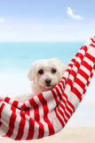 Cute dog relaxing hammock beach Stock Photo