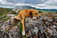 Cute dog resting Stock Photography