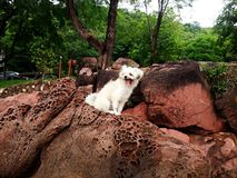 The cute dog on the rock Royalty Free Stock Photos