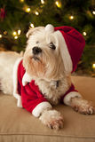Cute dog in Santa costume Royalty Free Stock Images