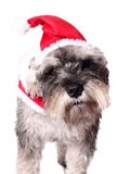 Cute dog in a Santa hat Stock Photography