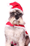 Cute dog in a Santa hat Royalty Free Stock Photo