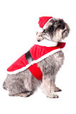 Cute dog in a Santa hat Royalty Free Stock Image