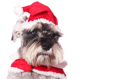 Cute dog in a Santa hat Royalty Free Stock Photography