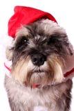Cute dog in a Santa hat Stock Photography