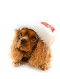 Cute dog in Santa hat Stock Images